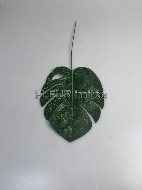 List monstera 60cm 12/240