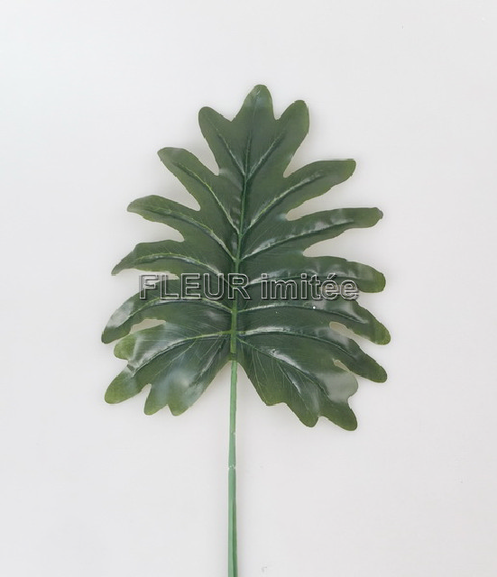 List monstera 49cm  12/48