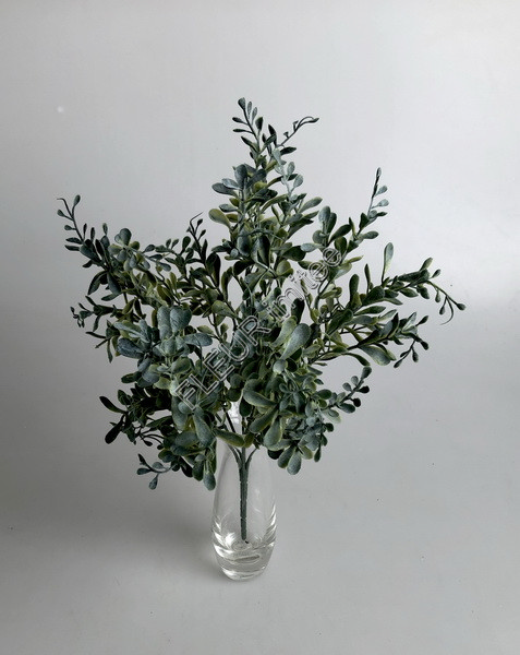 Buxus x5 frost  32cm 24/240