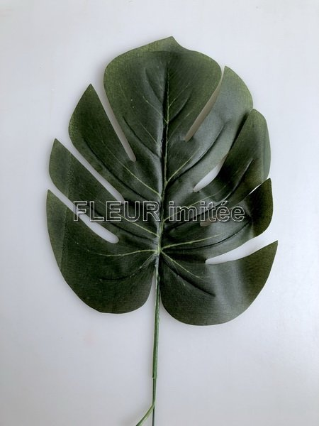 List monstera 16/42cm 12/960