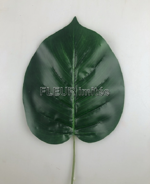 List pothos latex 60cm 12/240